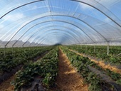 polytunnel type structures made of power textile fabrics may provide significant amounts of power